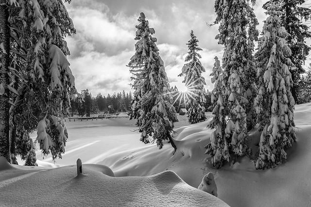 Winterwald in monochrome