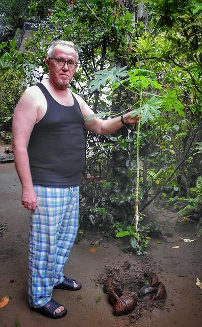 3) Bring the Papaya Plant to the Hole
