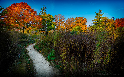 autumn oakpark cookcounty il usa lindbergpark landscape fallcolors 2019 october fall morning morninglight light path glowing orange red green blue yellow russet white black illinois prairie nativeprairie d850 nikon nikond850 nikondslr dslr nikon1424mm 1424mm nikonafsnikkor1424mmf28ged nikkor 17mm