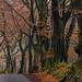 A walk along beech road