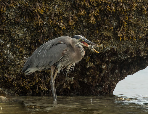 the thing I love about herons is they. all have a different look...!!