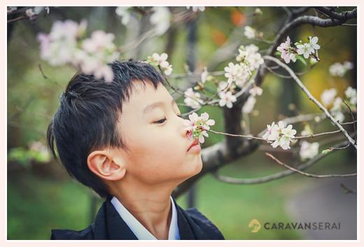 七五三 四季桜を愛でる男の子