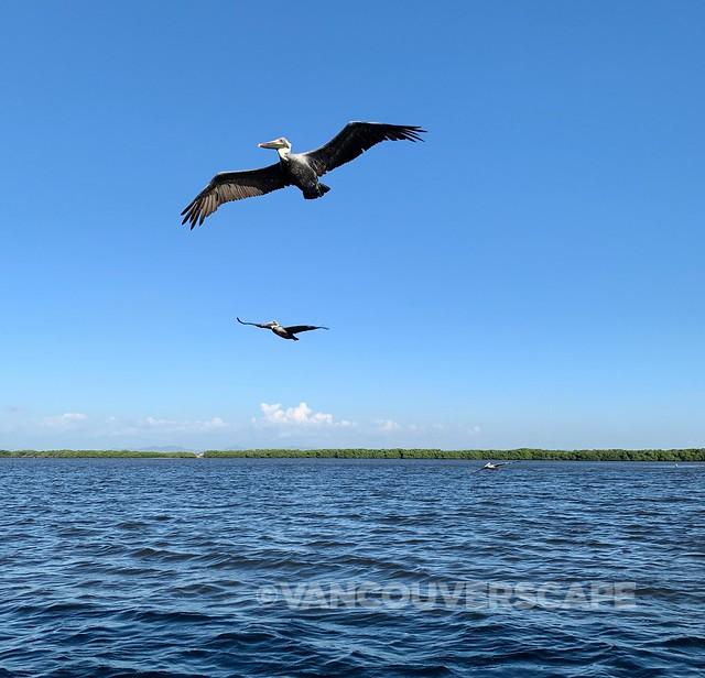 Mazatlan Bird and Nature Tours-8