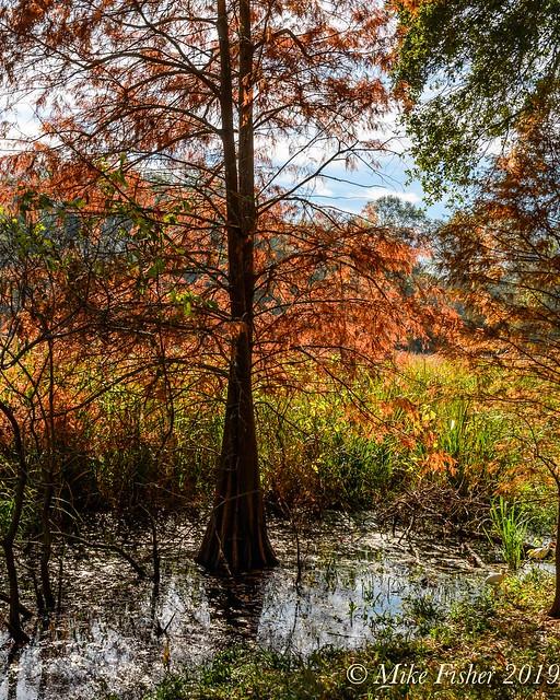 Fall Day on Creekfield Lake