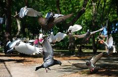 Flyng dance