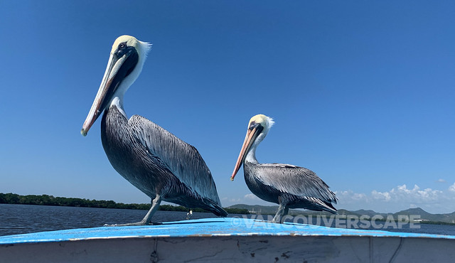 Mazatlan Bird and Nature Tours-4