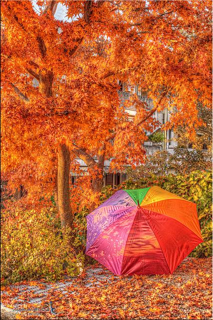 ...dell'autunno i simboli