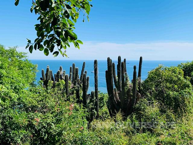 Mazatlan Bird and Nature Tours-15