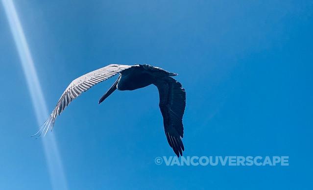 Mazatlan Bird and Nature Tours-3
