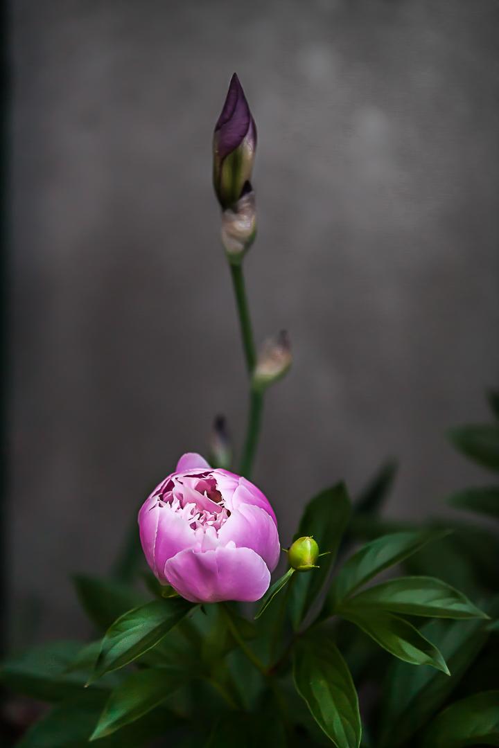 Le réveil du printemps
