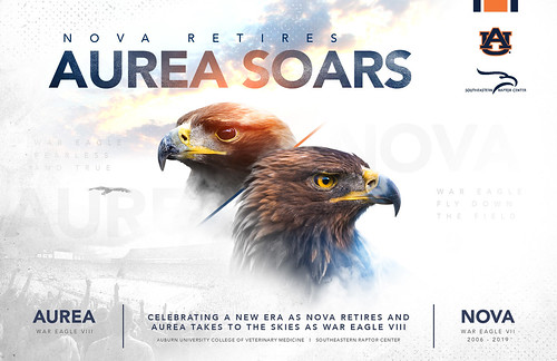 A graphic stating showing the eagles and stating Nova Retires, Aurea Soars.