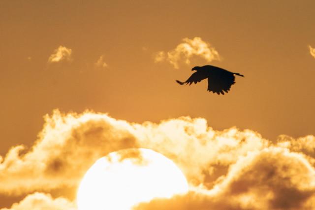 Eagle at sunrise-6409