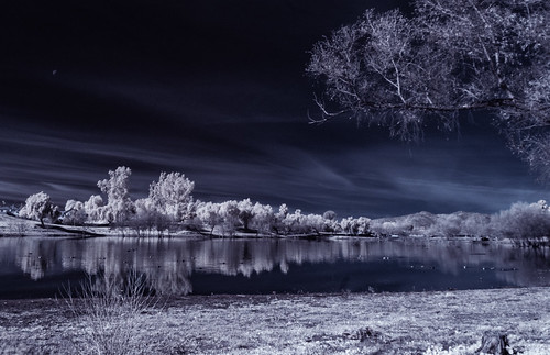 view lindolake lakeside infrared infraredphotography convertedinfraredcamera ir composition channelswapping clouds reflections trees nature surreal pano panorama birds