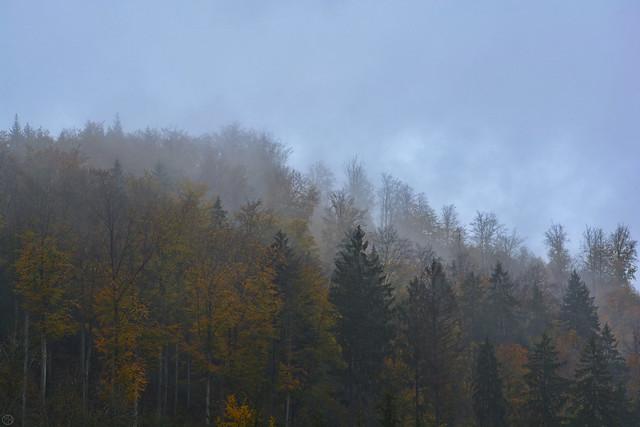 misty colours of fall Falkensteig 2019