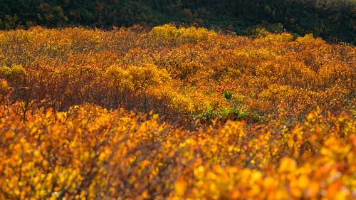 鳥海山52・Mt.Chokai
