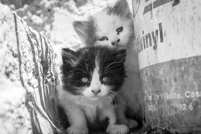Street Cats, Morocco