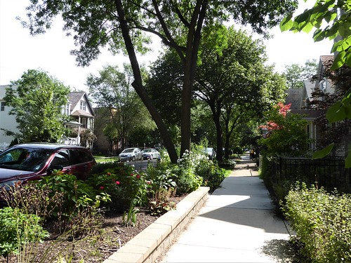 chicago ravenswood neighborhood urban architecture house residence building garden nature flora plants green leaves foliage trees