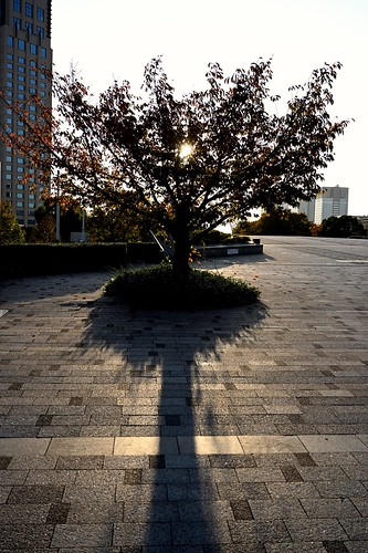 sunset tree shadow nature cityscape backlit