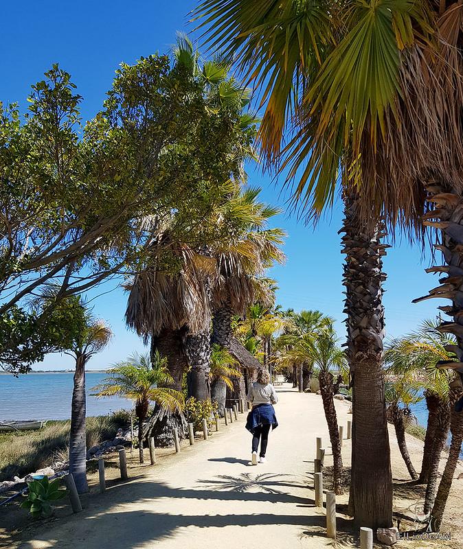Que ver en el Muelle de las Carabelas en Palos de la Frontera  (13)