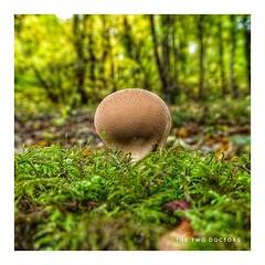 Nuclear Fungus!