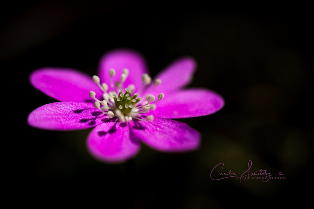 Pink in the forest
