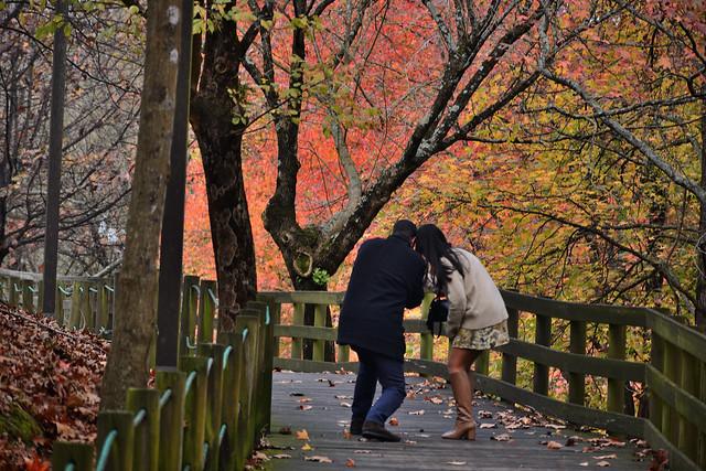 Autumn in Porto - III
