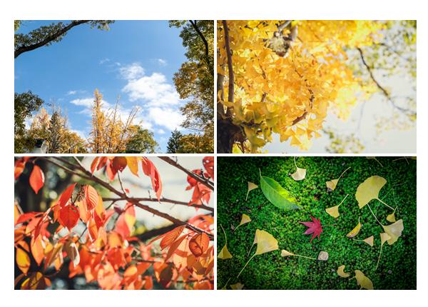 秋の色 青い空 色づく葉っぱ