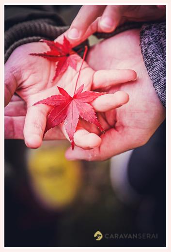 手のひらの上のモミジの葉