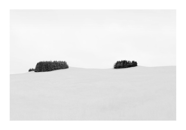 Two Trees | Southern Iceland