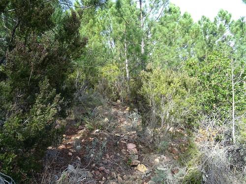 Le cairn dans la bande-clairière à la rentrée dans la forêt