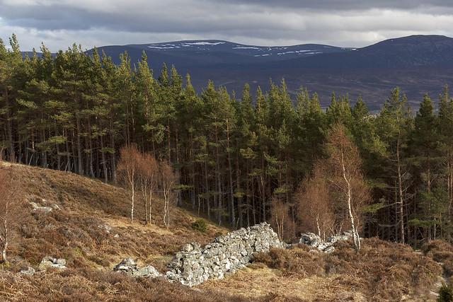 Creag Bheag, Kingussie, Cairngorms National Park, Highland, Scotland, UK