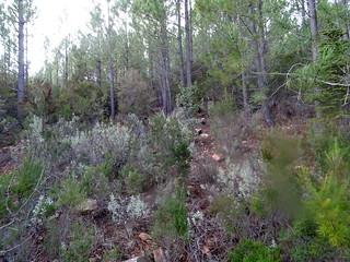 Dans la montée à restaurer entre le cairn de l'orée de la forêt et le départ du chamin marqué