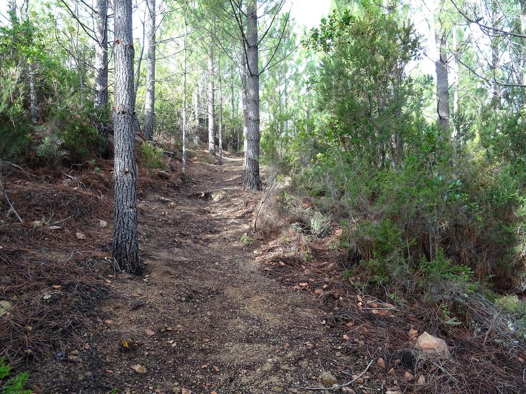 Sur l'ancien chemin marqué : partie restaurée par Denis à l'approche du col 480m
