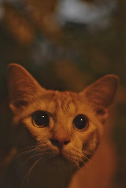 Cat in the night portrait