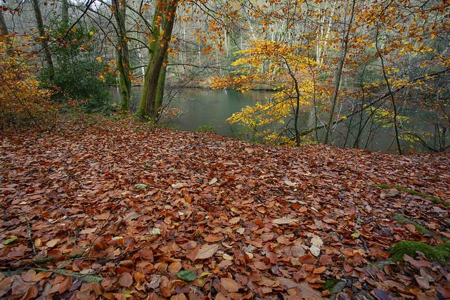 Autumn Leaves @ Waggoners Wells