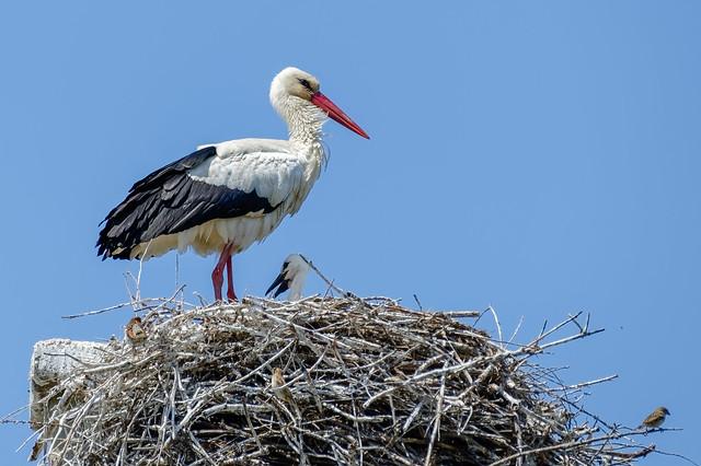 Bébé au nid et quelques petits admirateurs..