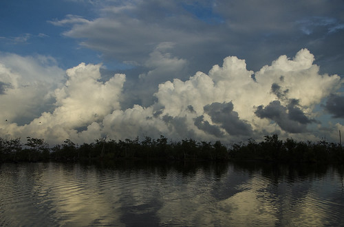 bigipan bigi pan suriname lake water bird birds paradise nature birdsparadise cloud clouds colorful colourful outside nickerie coronie d7000 view ibis scarletibis reflection reflections mirror tree trees blue
