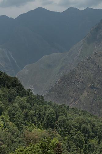 Kauri Pass-10.jpg