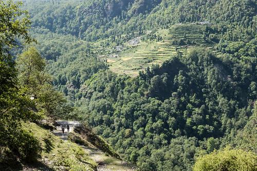 Kauri Pass-14.jpg