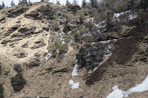Kauri Pass-31.jpg