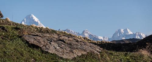 Kauri Pass-33.jpg