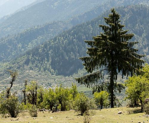 Kauri Pass-44.jpg