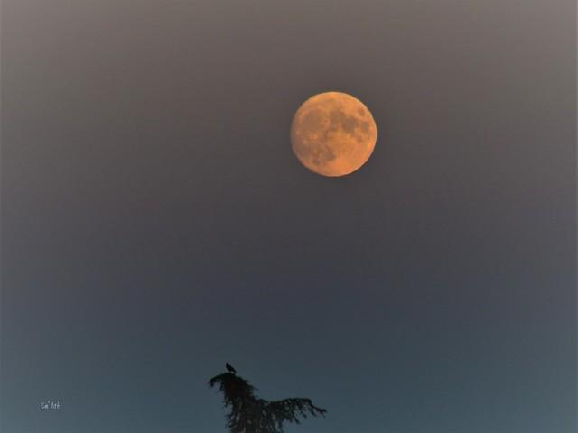 Au clair de la lune, mon ami Pierrot (French child song)