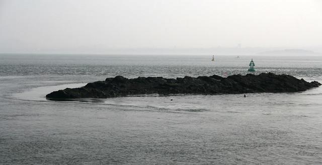 Seals near Inchcolm