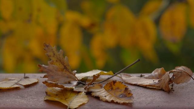 """""""Ombre arrugginite paiono le foglie quando d'autunno abbracciano i poeti."""" MASSIMO PISTOJA"""