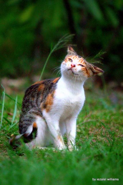 Don Juan cat serenade IMG_9619