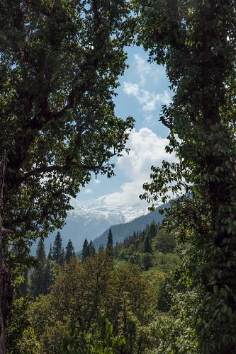 Kauri Pass-8.jpg