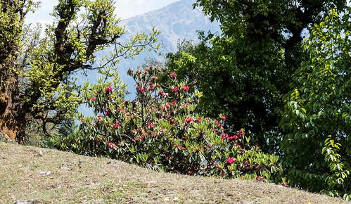 Kauri Pass-9.jpg