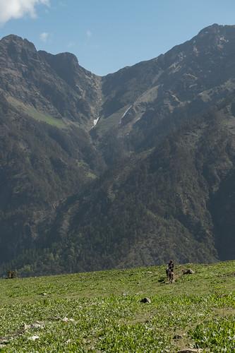 Kauri Pass-22.jpg