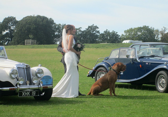 vintage  cars  wedding party + dog